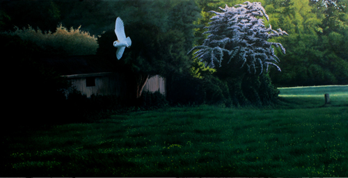 Barn Owl, 'Evening patrol'