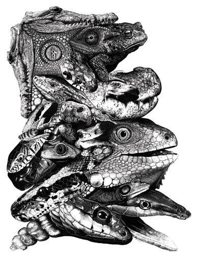 Mike Hughes Wildlife Art and Illustration - Reptiles and ...
